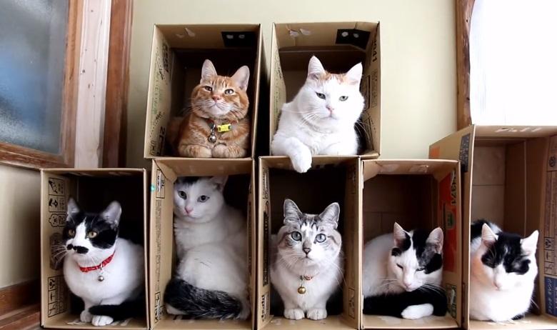 A Box For Each