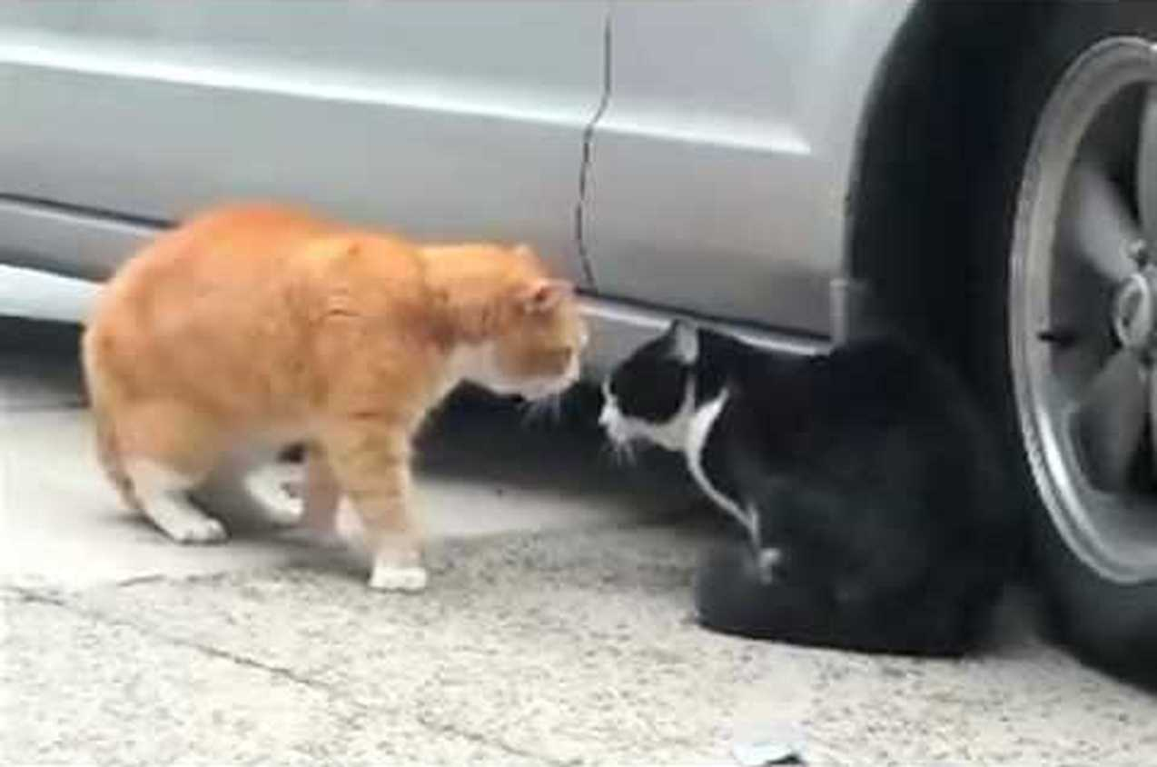 These talking cats have an intense border dispute