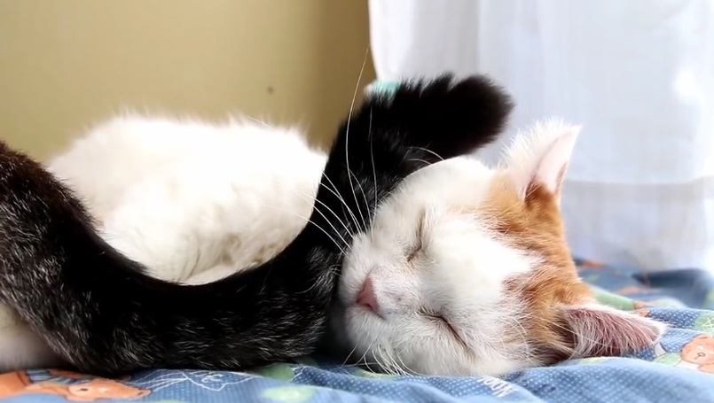 Shiro Trying To Sleep