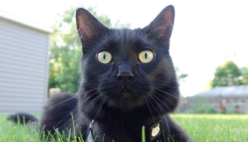 What Black Cats Think