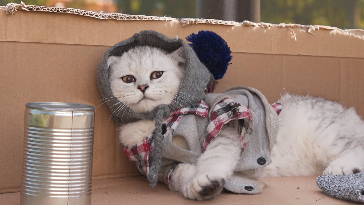Prince Michael raising money for homeless cats