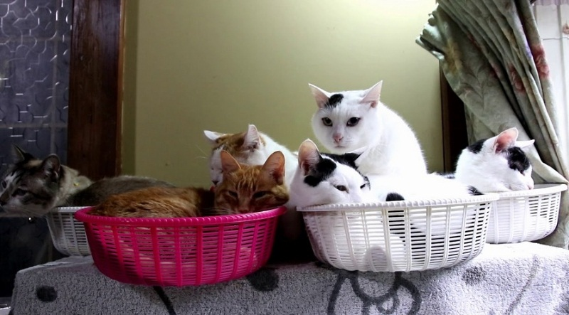 Beautiful Cats Relaxing In Baskets