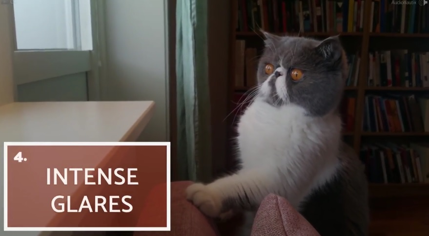 10 Strange Things Cats Do
