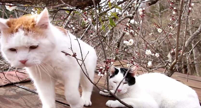 Cats And Spring Flowers