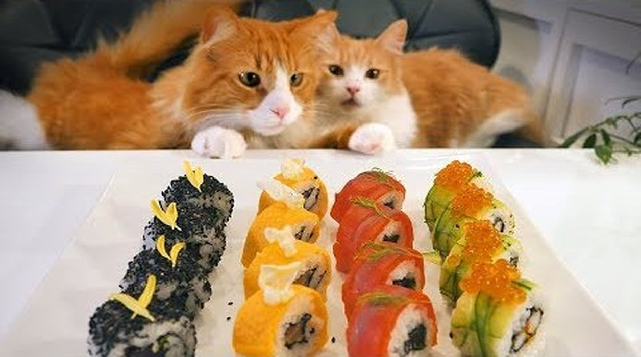 Cats and Cooking - A Japanese Take on American Sushi