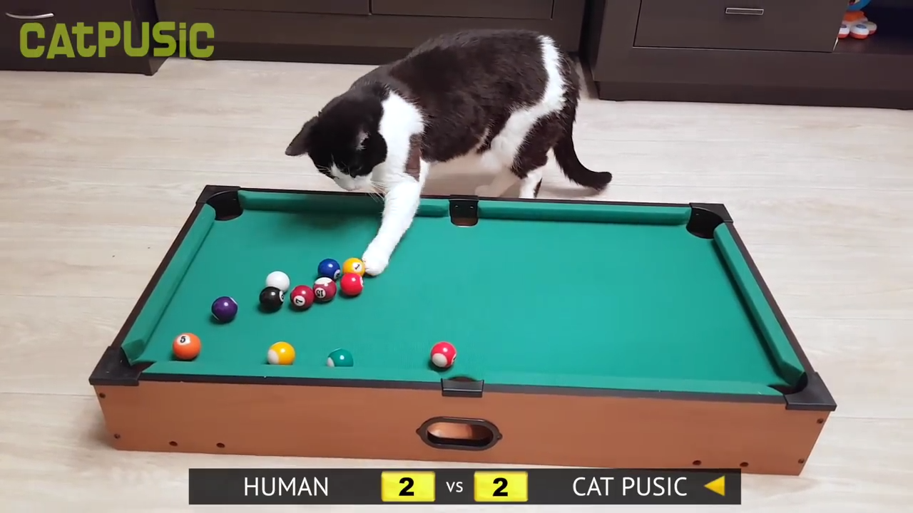 Cat vs Human - Pool Champion