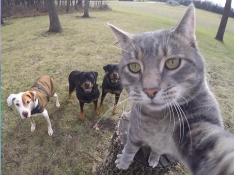 This Cat Takes Better Selfies Than You