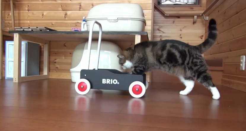 Maru And His Pushcart