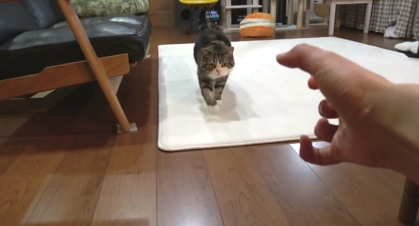 How To Call Maru By Hand