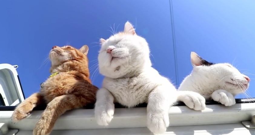 We Love Sunny Days
