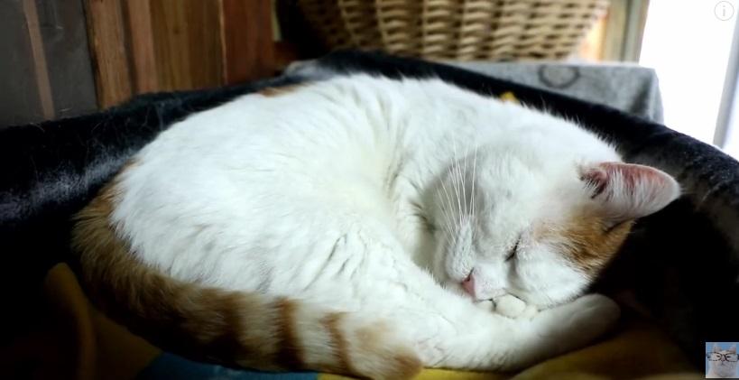 Shiro Sleeping