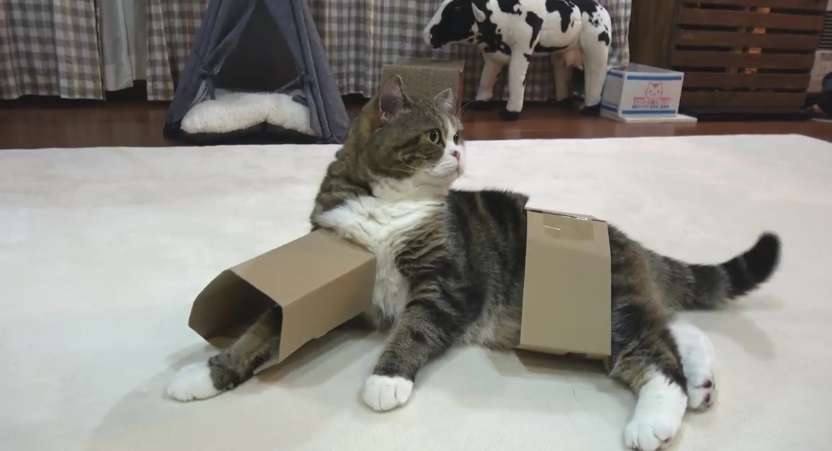 Maru And His Box For Face