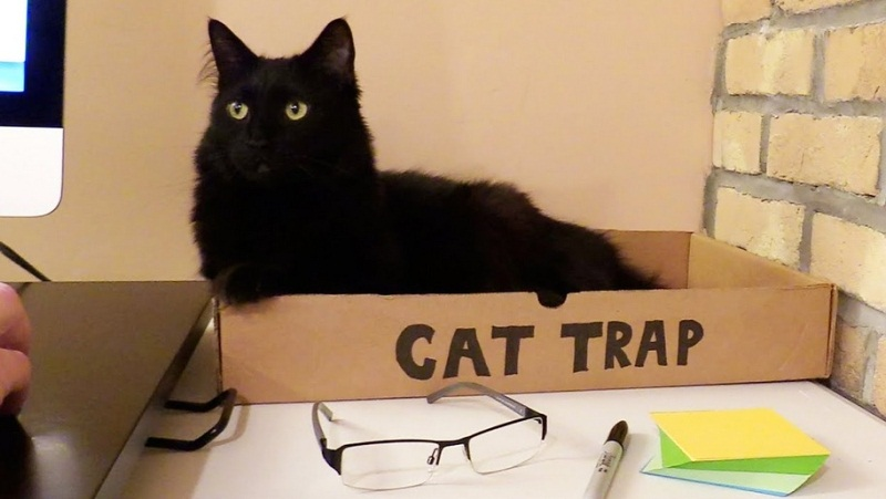 5 Signs You Work With Cats