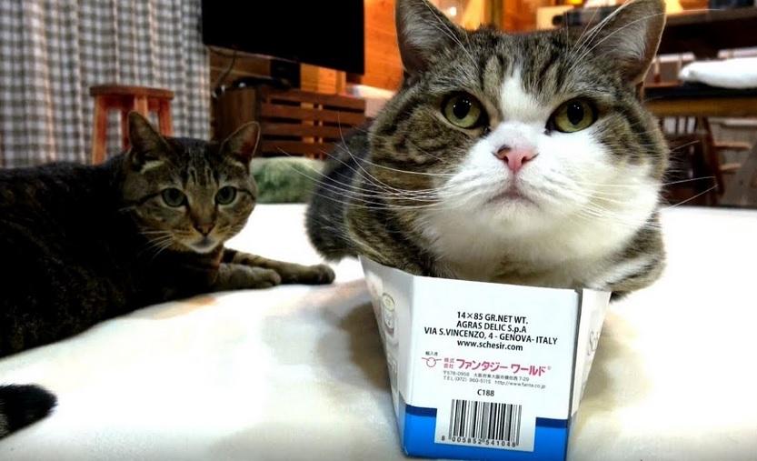 Box Too Slim For Maru ?