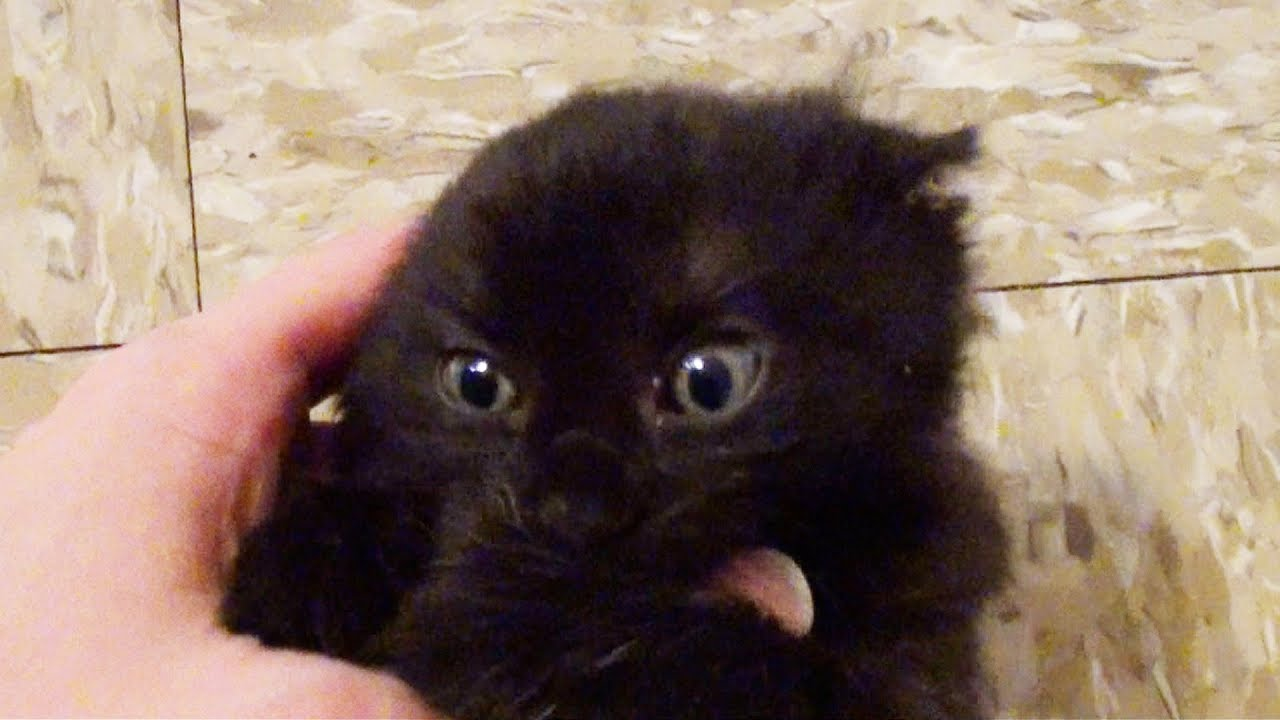 Playing with a cute tiny house panther