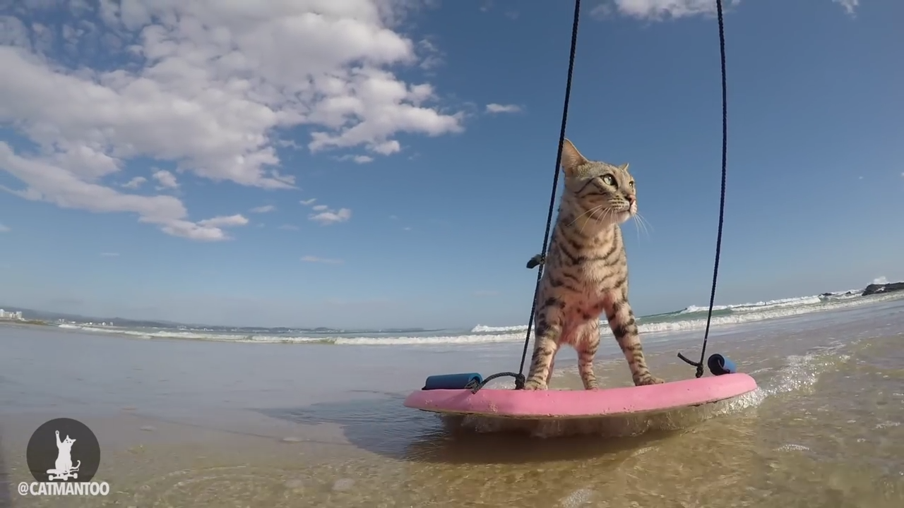 Cat gives us a demonstration of skimboarding