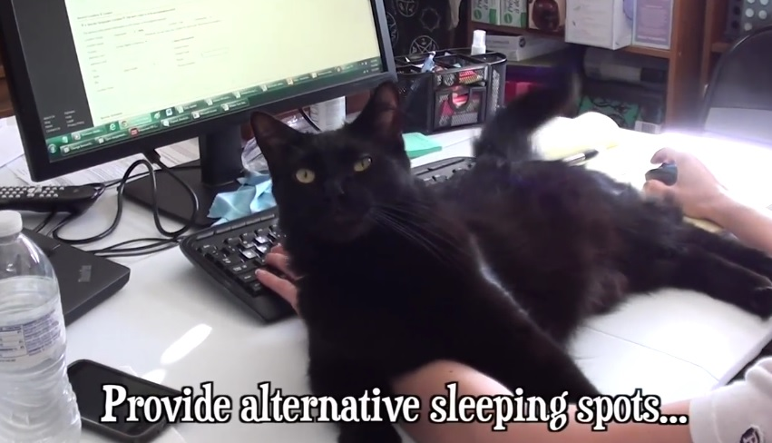 Working With Cats Tips