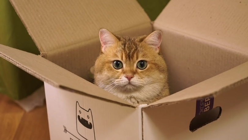 Hosico And His Box
