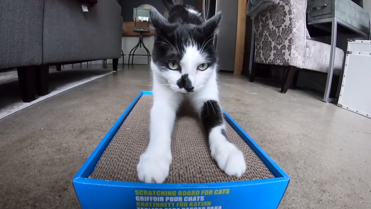 Scratch pad for happy cats