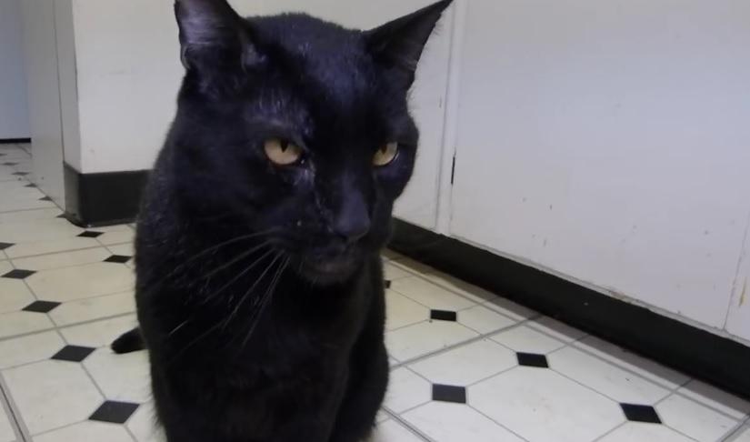 Talking Kitty Cat - Sylvester Goes To The Vet