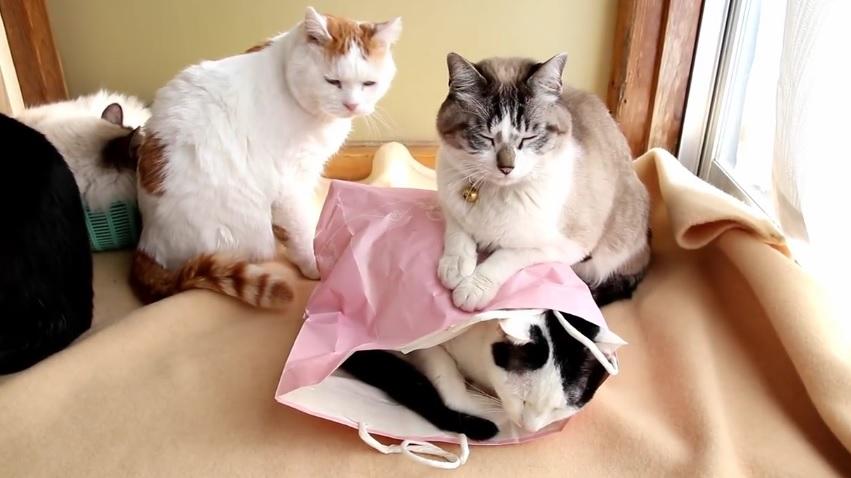 I like This Paper Bag
