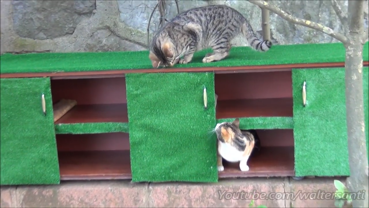 Building an awesome cat house from an old shoe cabinet
