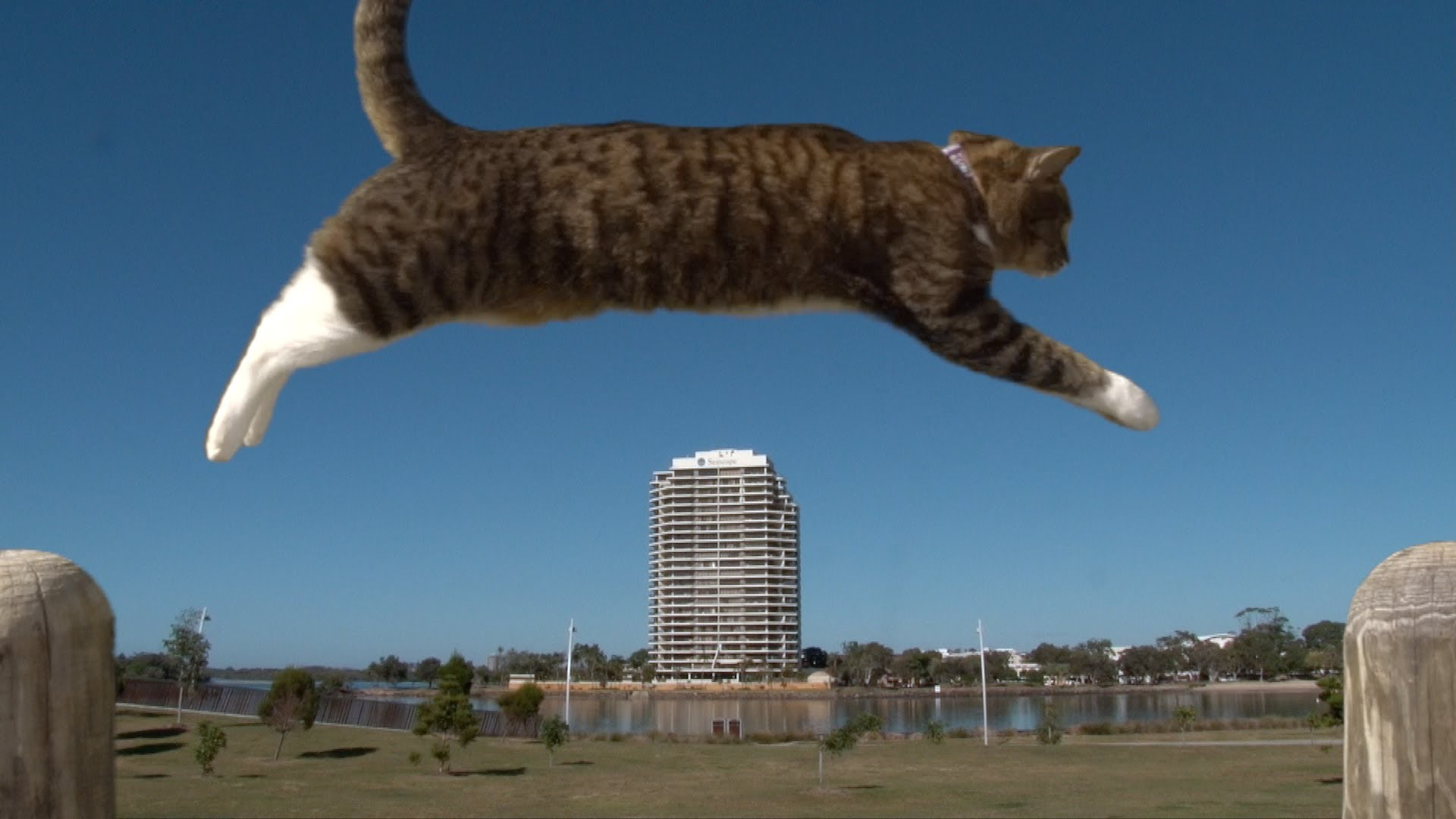 Purrkour - The awesome parkour cat
