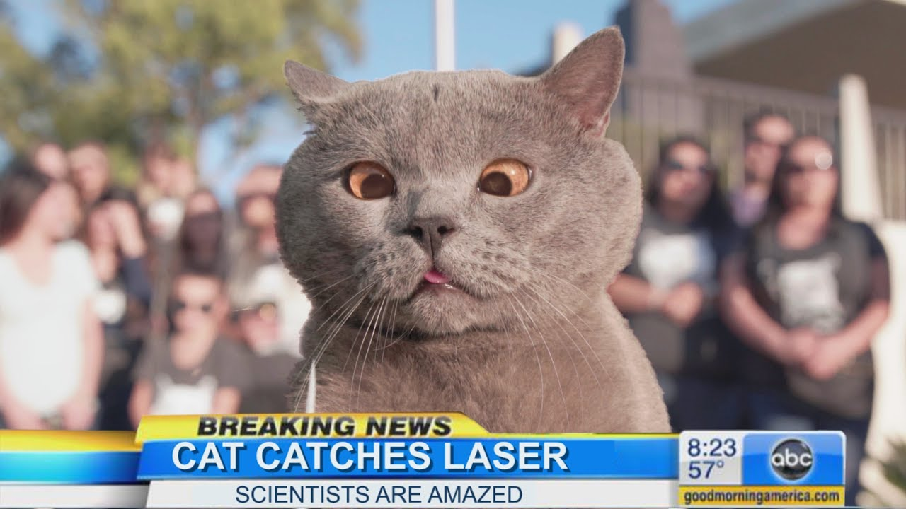 The first cat in the world who caught the laser (Aaron's Animals)