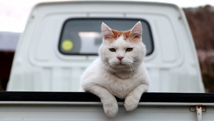 Shiro On The Back Of Truck
