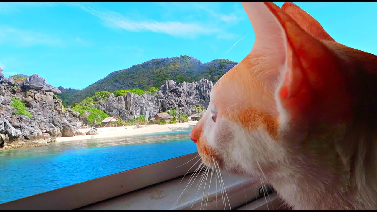 Maui Boy - The Traveling Cat