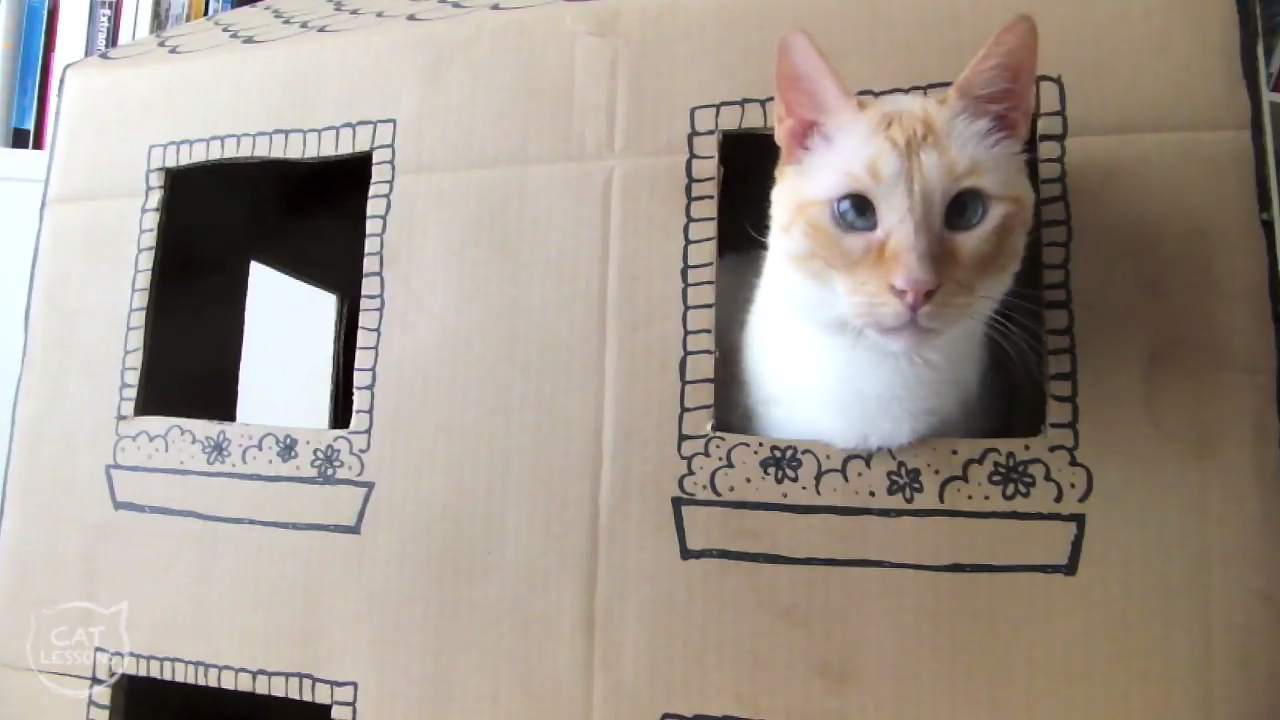 Building a cool cardboard house for cats