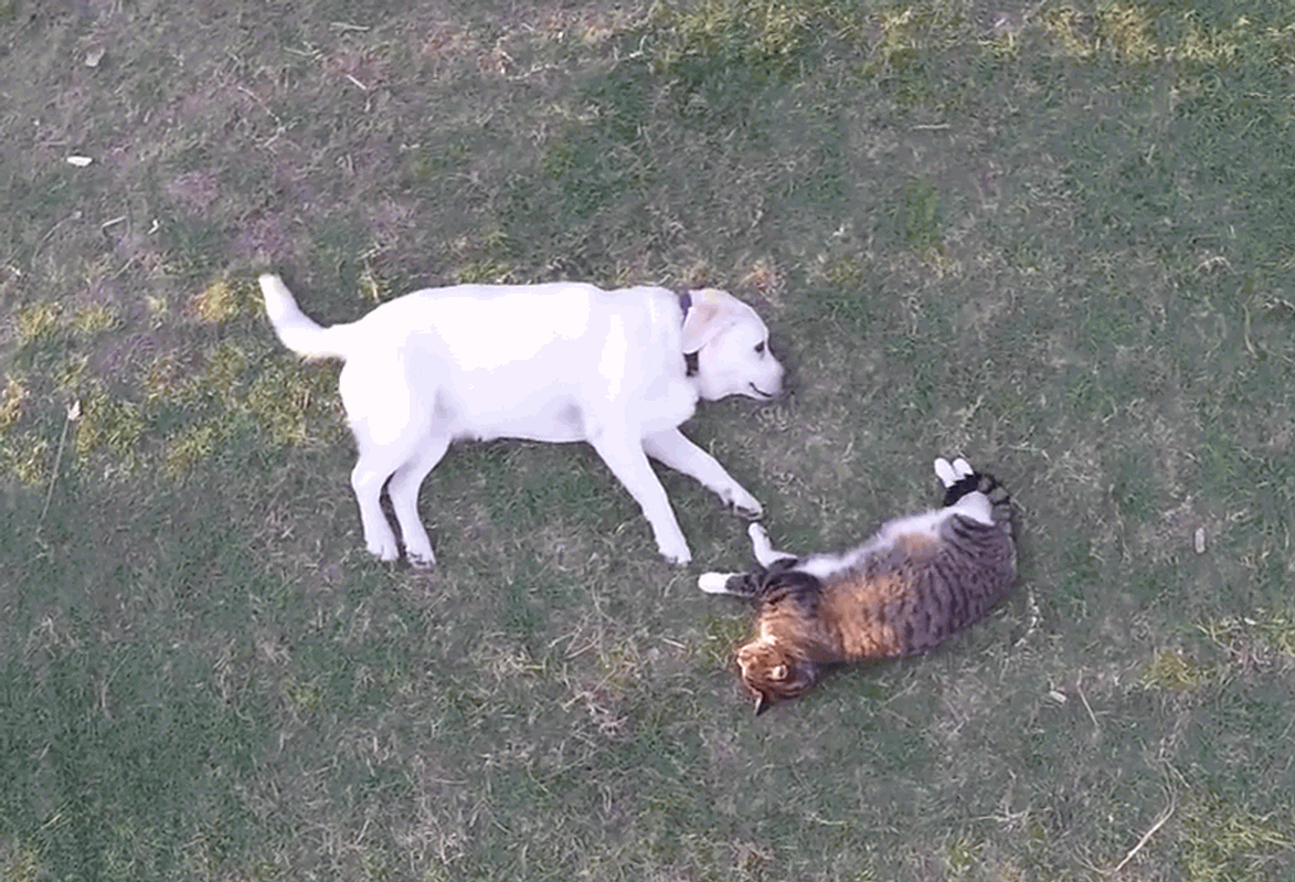 A beautiful friendship between a cat and a dog