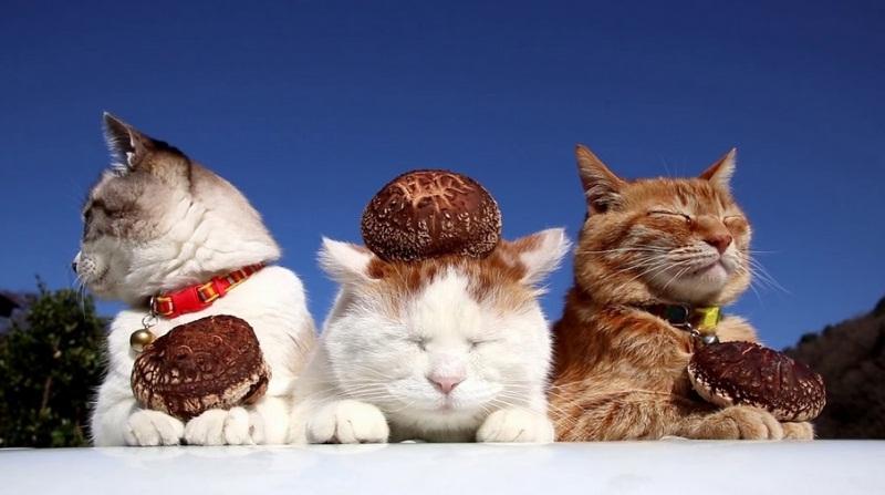 Beautiful Cats Sitting Outside