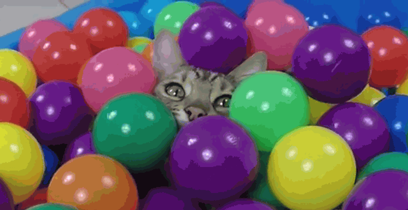 The kitty and the ball pit