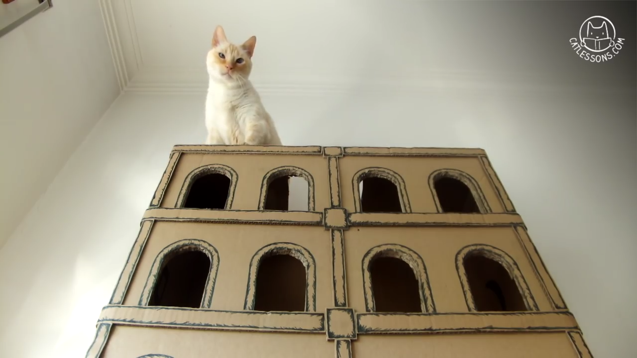 Building a 5 floor cardboard hotel for cats