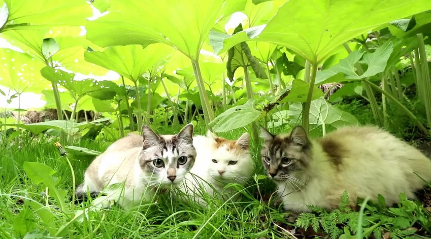 Cats Relaxing Outside