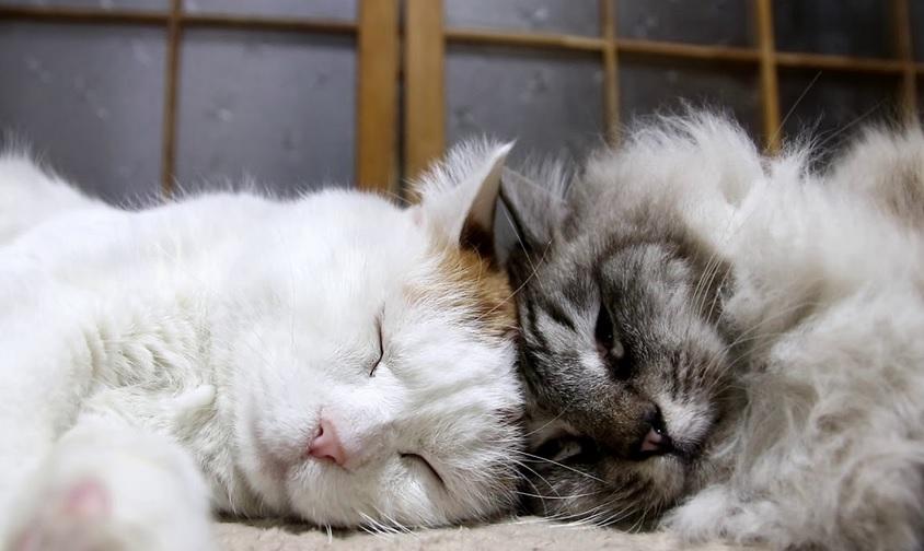 Peaceful And Sleepy