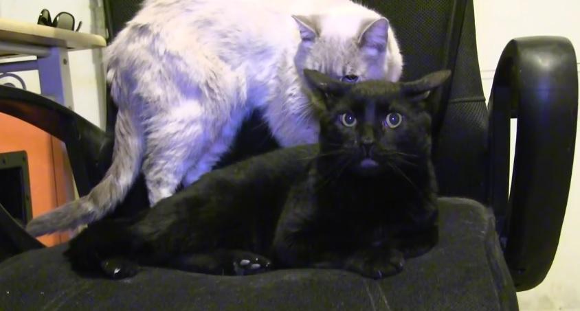 Talking Kitty Cat- Random Short Video