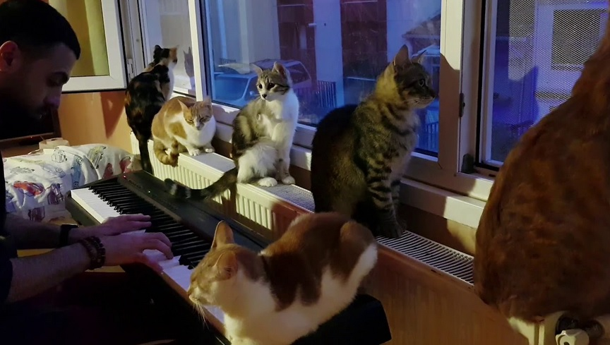 Guy Playing The Piano For His Cats