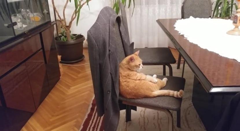 Cute Gale Sitting Like A Human