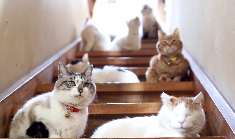 Beautiful Cats On Stairway