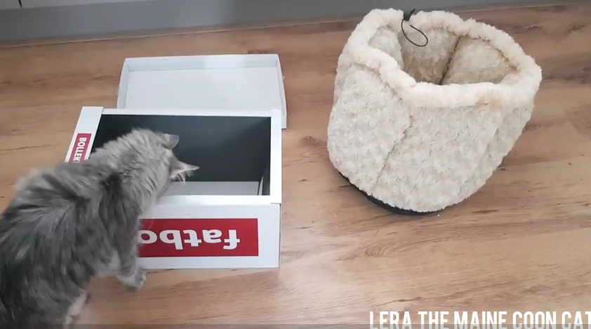 Cat Logic: Free Box Vs Luxury Basket