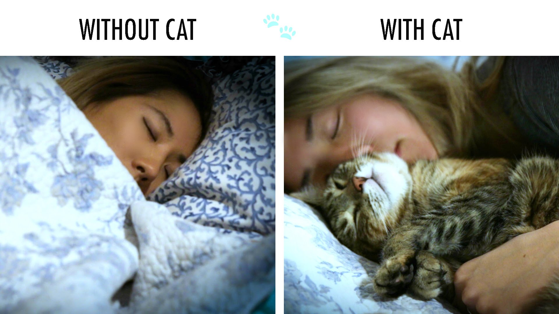 Life without and with a cat