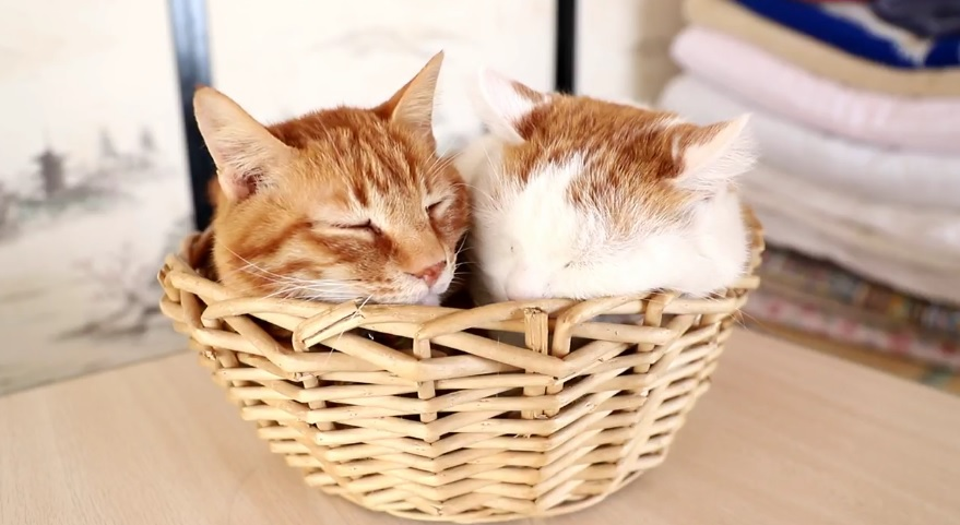 Tora And Shiro In The Basket