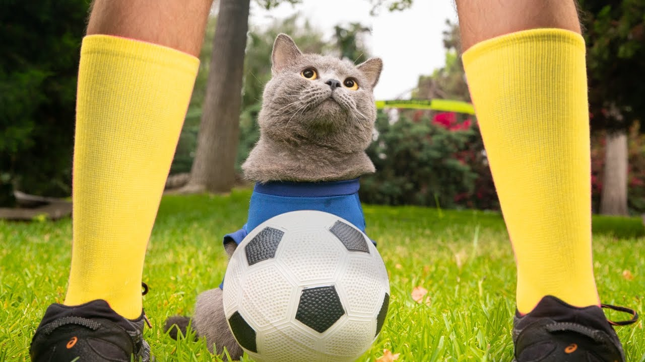 World Cup inspired this cat to become a football player