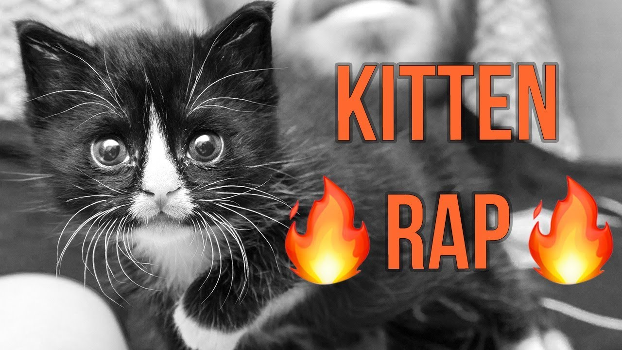 Kitten Lady Rap feat. Badger