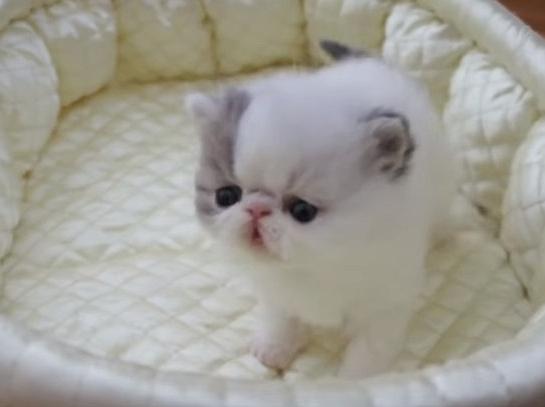 Cute Little Kitten Sneezing