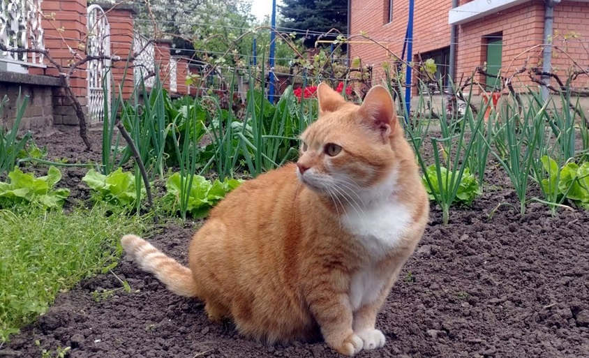 Gale Relaxing In The Garden