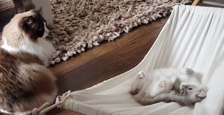 Timo's Brother Playing In The Hammock