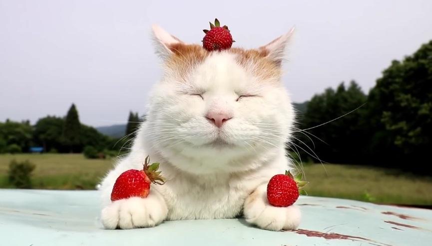 Strawberry Shiro